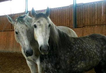 Pferde sind die perfekten Trainer für uns.