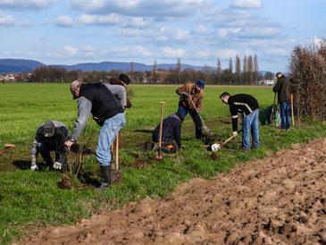Ehrenamtliche beim Pflanzen in der Rintelner Feldmark. - Foto: Kathy Büscher