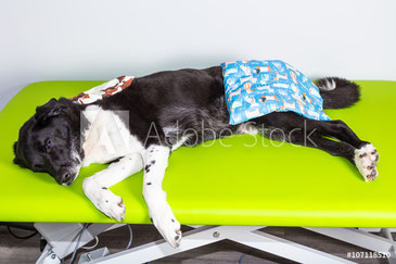 Hundeschule, Hundetraining, Entspannung, Dogslumber, Wellness für Hunde, Hundeschule Butzbach, TTouch, Tellington Touch