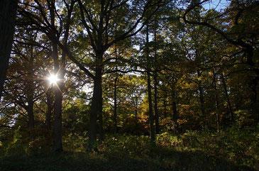 Herbstwald und Sonne - Farbe und Licht!