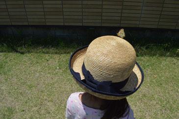 帽子にとまった!