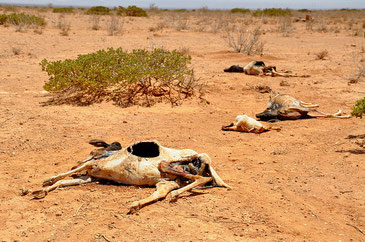 パリ協定でも止まらない気候変動。異常気象を止める手立てはあるのか。(写真はソマリアの干ばつ)Oxfam East Africa CC BY 2.0