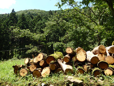 現在は林野庁と協働する「Forest Good」でバイオマスを支援!