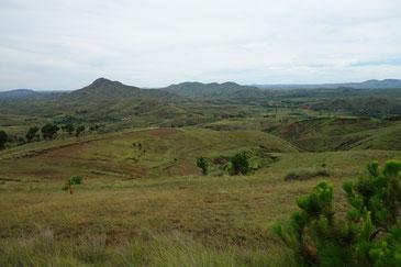 樹々が失われゆくマダガスカルの大地