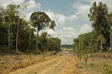 今なお続く熱帯林破壊をいかに止めるのか Rainforest Action Network CC BY-NC 2.0