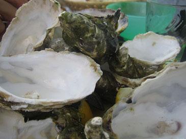 新年に牡蠣を食べるフランスの文化が危機に alex de carvalho / CC BY 2.0