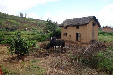 井戸の隣で牛の糞尿が垂れ流される。衛生的にも何とかしたい。