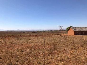 見渡す限りのマダガスカルの荒地での緑化事業が始まります。
