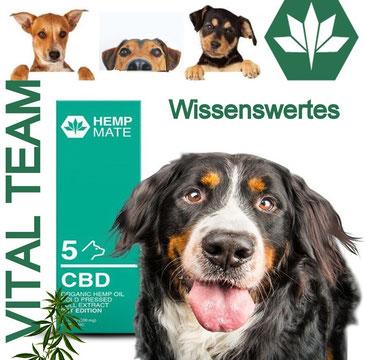 Cannabis Vital Team CBD Vertrieb