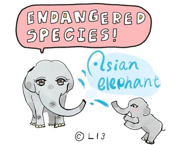 アジアゾウは南アジアや東南アジアなどに分布しているゾウの総称。 森林伐採・開墾による生息地の破壊、牙を目的とした密猟などにより生息数は減少を続けている。 鼻だけで、およそ10万もの異なった筋肉がある。
