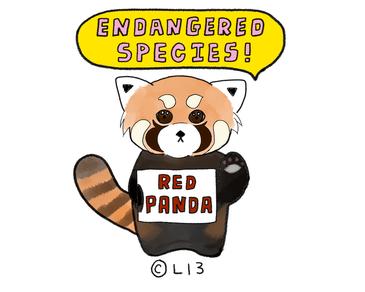 日本の動物園で人気の高い「レッサーパンダ」も実は絶滅危惧種
