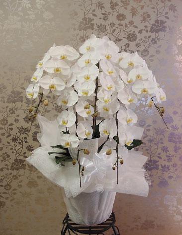立派な5本立ち胡蝶蘭