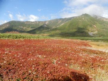 9月の旭岳裾合平