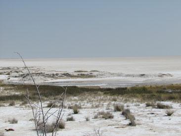 Salzpfanne in Etosha