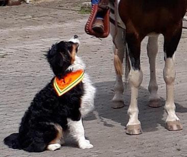 Reitbegleithund, Begleithund Halstuch für Hunde, Pferd,