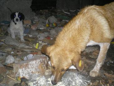 Futtersuche im Müll