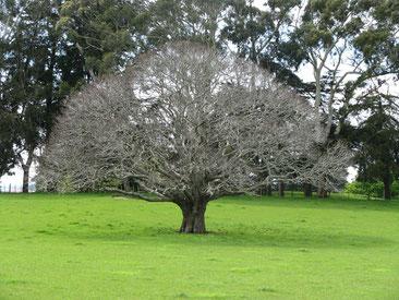 arbre soutenant la vie de Laurence Martin, psychologue du travail