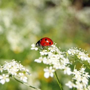Wissenswertes über Gartennützlinge