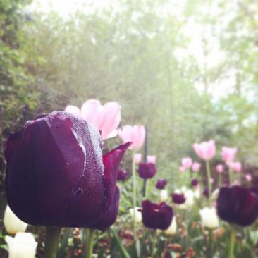 Mit den Blumen auf Augenhöhe: Spannenderer und eher ungewöhnliche Blickwinkel