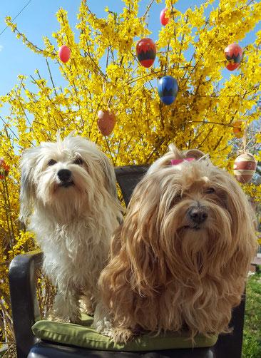 frohe Ostern auch von Tami und Bella