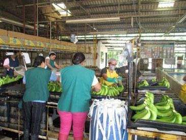 EMIH, Honduras, Sozialpolitik, Umweltschutz