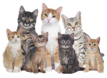 Photo d'un groupe de chats