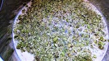 houblonnage propriété aseptisante du houblon, armatisation de la bière ?La Mousse du Guiers