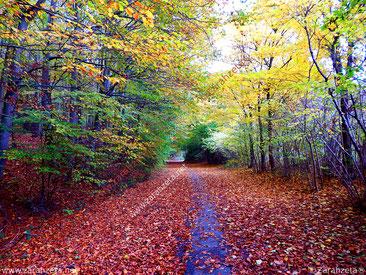 Waldweg mit buntem Laub im Herbst