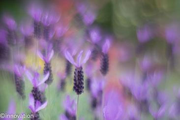 印象派花の写真