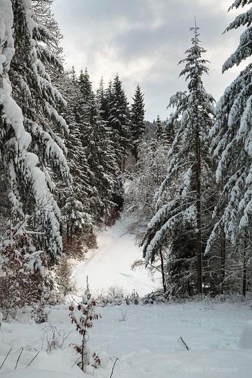 Bick auf die verschneite Lichtung - Lichtung im Winterwald