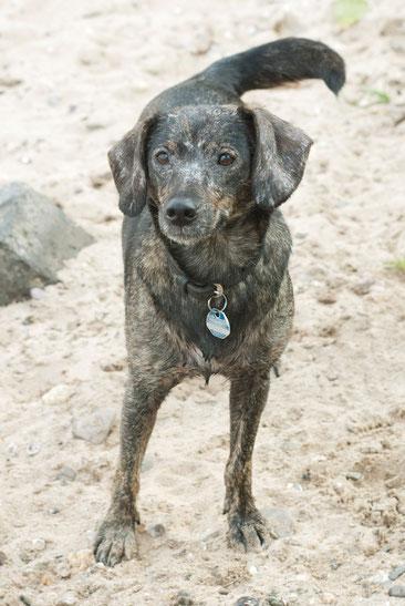 Hund steht im Sandstrand in Köln und schaut in die Kamera