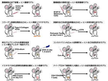 疾患モデルマウス