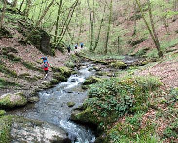 Trailrunning Traumschleife Ehrbachklamm