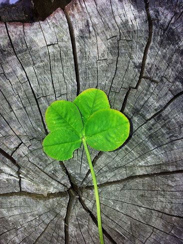 Das Glück findet dich, wenn du glücklich bist - Feng Shui im Jahreskreis - der SOULGARDEN Blog