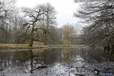 Eiche am Teich