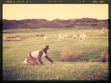 ニュージーランドで私が羊になれた瞬間