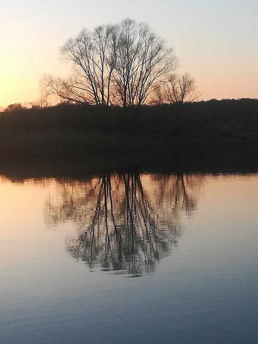 Winterbaum reflektiert sich in der Elbe