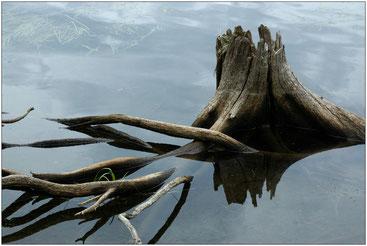 Большой Соловецкий остров. Июль 2005 г.