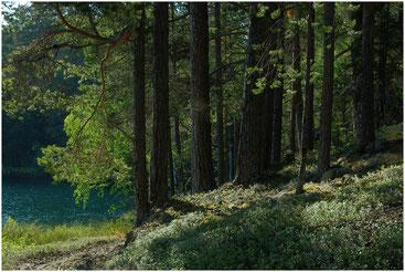 Зеленое озеро. Большой Соловецкий остров. Архангельская обл. 2005 г.