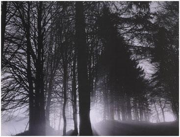 Лесная мгла. Швейцария. Фото Кэтрин Эймс. 1994 год.