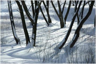 Царицыно зимой. 2005 г.