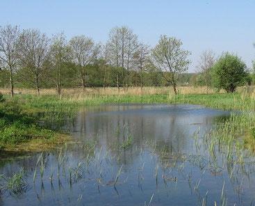 Seigen und Gehölzstrukturen sorgen für ein kleinteiliges Biotopgefüge.                         Foto: Stadt Straubing