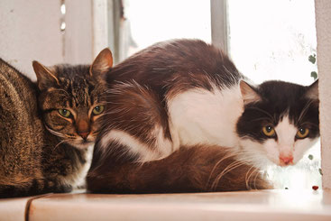 aqui nossos gatos para adoção