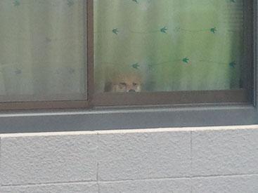 窓からわんちゃん