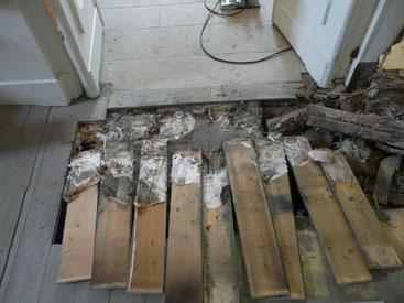Frisches Pilzmyzel unter dem Fußboden, westlicher Eingang