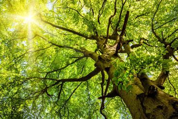 Nachhaltigkeitsmarketing