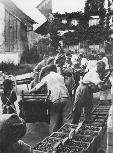 Kirschen abgeben vor der Gnossi (1944)