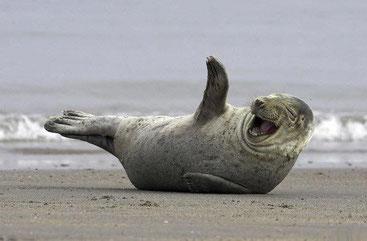 sortie en pirogue pour observer la baie des phoques