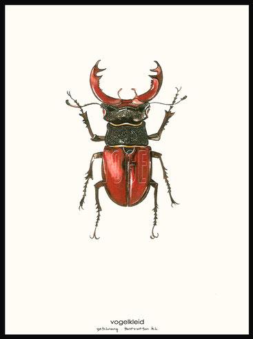 Käfer, Pflanzenlehrtafel, Vogellehrtafel, Vogelillustration, Vogelzeichnung, Vintage, Poster