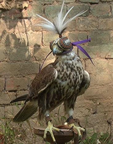 Kaiser Friedrich II. führte in der ersten Hälfte des 13. Jahrhunderts die Falkenhaube ein